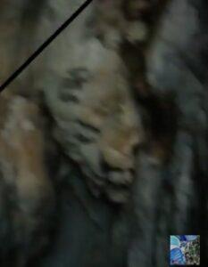 Cara de Simio en las grutas de Cadereyta